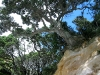 060305_cathedral_cove07