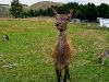 060308_deer02
