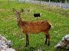 060308_deer06