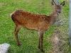 060308_deer08