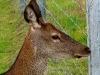 060308_deer09