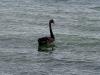 060308_lake_taupo01