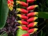 061002nadiflowers01.jpg