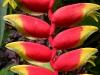 061002nadiflowers02.jpg
