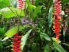 061002nadiflowers03.jpg