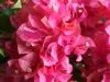 061002nadiflowers04.jpg