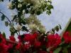 061002nadiflowers05.jpg