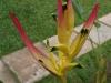 061002nadiflowers06.jpg