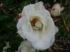 061117_laketekapu14.jpg