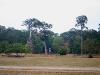 070307elephantterrace11.jpg