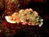croisiere-similians-thailande-090.jpg