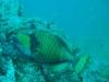 croisiere-similians-thailande-304.jpg