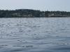 080816_orcas02.jpg
