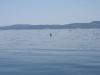080816_orcas04.jpg