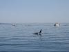 080816_orcas06.jpg