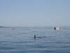 080816_orcas08.jpg