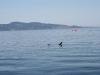 080816_orcas09.jpg