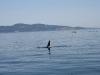 080816_orcas13.jpg