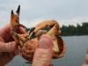 080817_crabfishing01.jpg