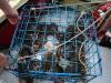 080817_crabfishing02.jpg