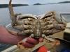 080817_crabfishing03.jpg