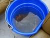 080817_crabfishing04.jpg