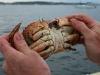 080817_crabfishing09.jpg