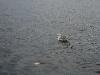 080817_crabfishing10.jpg