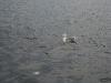 080817_crabfishing11.jpg
