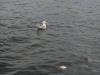 080817_crabfishing12.jpg