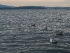 080817_crabfishing13.jpg