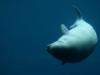 080823_aquarium12.jpg
