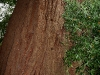 080830_redwoods01.jpg