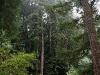 080830_redwoods02.jpg