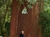 080830_redwoods03.jpg