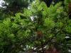 080830_redwoods08.jpg