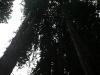 080830_redwoods14.jpg