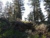 080914_forest_canyon02.jpg