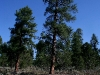 080914_forest_canyon05.jpg