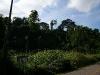 081121_palenque02.jpg