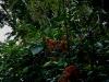 081121_palenque03.jpg
