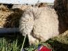 090630_farm_fair03.jpg