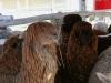 090630_farm_fair05.jpg
