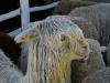 090630_farm_fair07.jpg