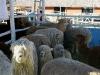 090630_farm_fair08.jpg