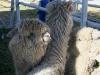 090630_farm_fair09.jpg
