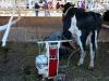 090630_farm_fair14.jpg