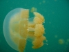 090819_jellyfish_lake01.jpg