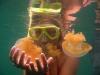090819_jellyfish_lake06.jpg