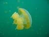 090819_jellyfish_lake11.jpg
